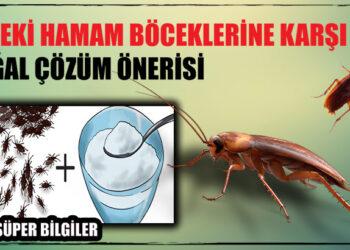 Evdeki Hamam Böceklerine Karşı Doğal Çözüm Önerisi 2