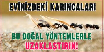 Evinizdeki karıncalardan bu doğal yöntemlerle kurtulun! 4
