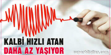Kalbi hızlı atan daha az yaşıyor! Eğer kalbiniz 1 dakikada... 7
