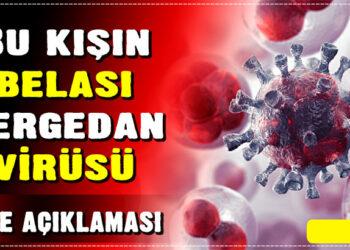 Bu kışın belası gergedan virüsü 2