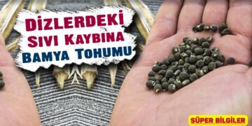 Dizlerdeki Sıvı Kaybına Bamya Tohumu 3