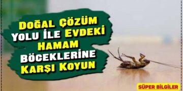 Doğal Çözüm Yolu İle Evdeki Hamam Böceklerine Karşı Koyun 1