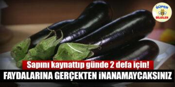 Çöp diye attığımız patlıcan sapının faydaları... 2