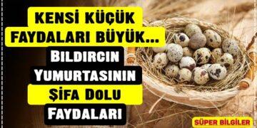 Bıldırcın Yumurtasının Şifa Dolu Faydaları 2