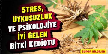 Stres, Uykusuzluk ve Psikolojiye İyi Gelen Bitki Kediotu 5