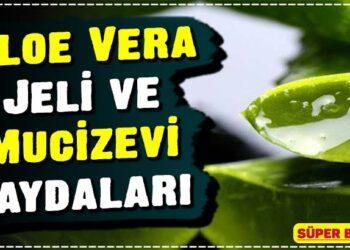 Aloe Vera Jeli ve Mucizevi Faydaları 2