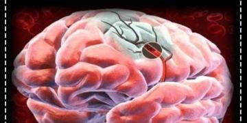 Beyne Giden Kan Akışını Arttırmanın 5 Yolu 2
