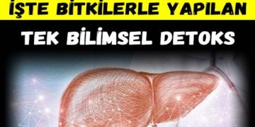 Karaciğeri yıkamak mümkün mü? İşte bitkilerle yapılan tek bilimsel detoks 2