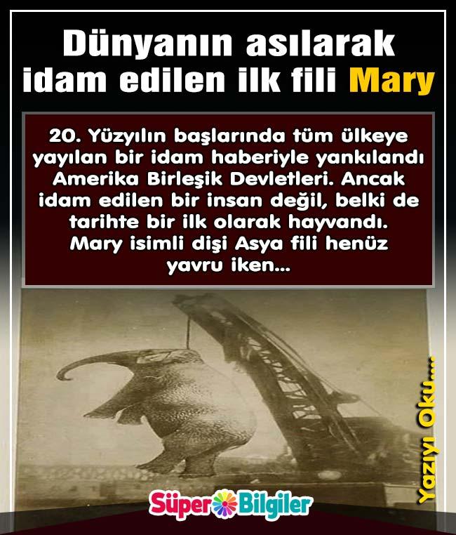 Dünyanın asılarak idam edilen ilk fili Mary 1