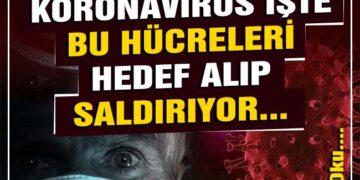 Bilim insanlarından flaş açıklama! Koronavirüs işte bu hücreleri hedef alıp saldırıyor… 2