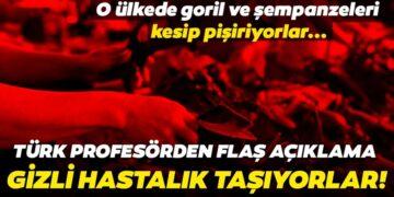 Türk profesörden son dakika corona virüs açıklaması! Kedilerden virüs bulaşır mı? Goril ve şempanzeleri kesip yiyorlar 1