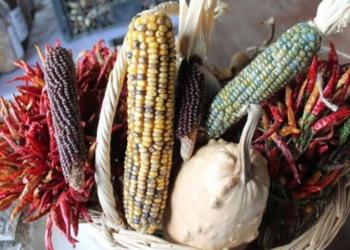 ata tohumu nedir ata tohumu ne ise yarar yerli atalik tohum neden onemli 9p8nxusr.jpg