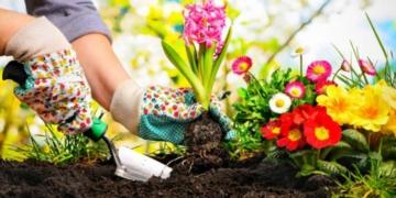 ilkbahar mevsiminde ekilecek olan cicekler nelerdir bahar aylarinda ekilecek bitkiler lbuh79u9.jpg
