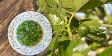 incir yapraginin faydalari nelerdir kuru incir yapragi cayi nasil demlenir oeg8sgen.jpg