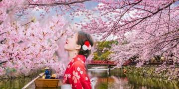 sakura ne anlama geliyor sakura cicegi nedir sakura ciceginin bilinmeyen ozellikleri jvkyavuw.jpg
