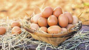 mor ciftlik 15li gezen tavuk yumurtasi 840046