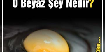 herkesin merak ettiği yumurta İçindeki o beyaz Şey nedir